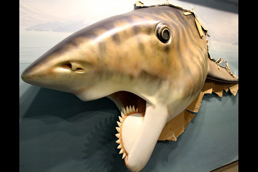 "A model of a Helicoprion, ""buzz saw shark,"" by Gary Staabs at the Alaska SeaLife Center's ""Summer of Sharks"" exhibit. Courtesy Alaska SeaLife Center"