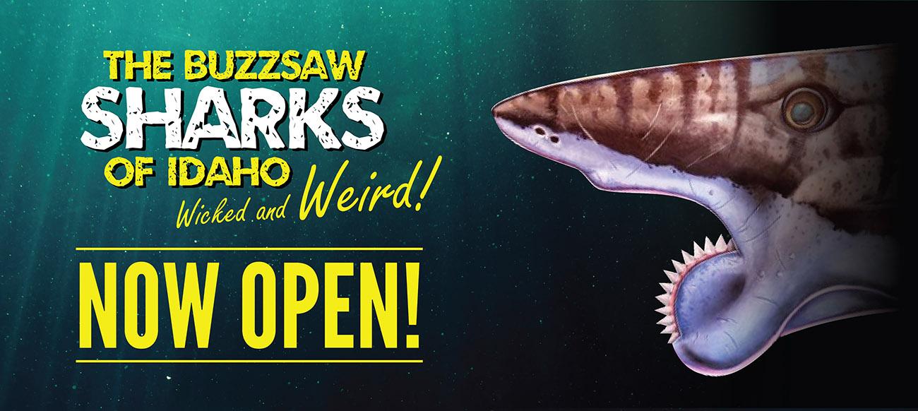 Buzzsaw Sharks of Idaho