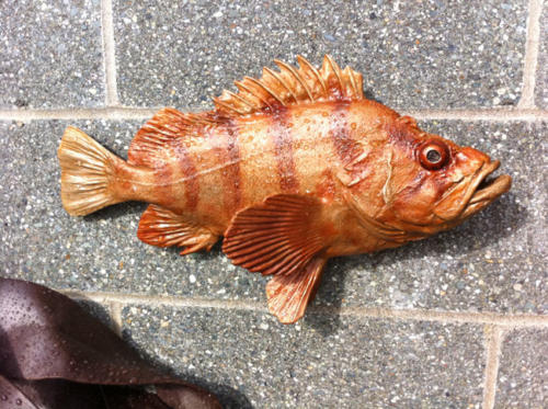 Tiger Rockfish bronze by Gary Staab