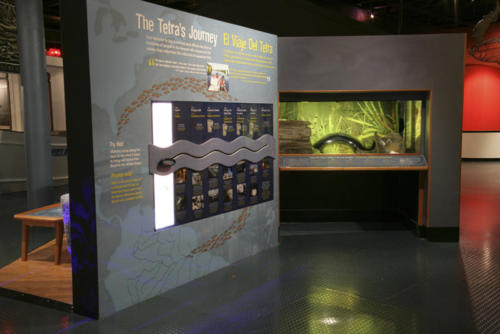 Aquarium and interactive showing how tropical fish are transported.