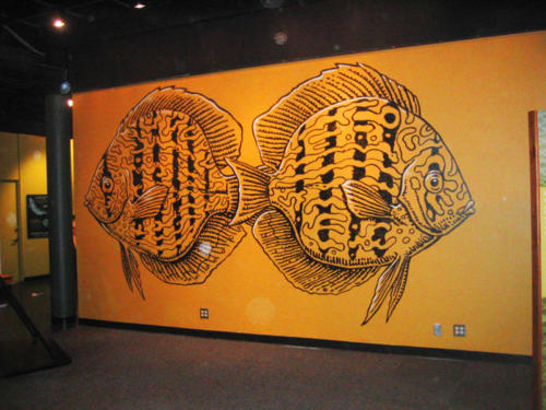 Wall graphic of discus fish, Miami Science Museum