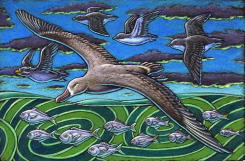 Albatross and Butterfish
