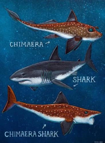 Chimaera,Shark and Chimaera-Shark
