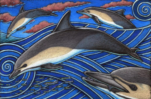 Common Dolphin (Pacific Ocean coloring)