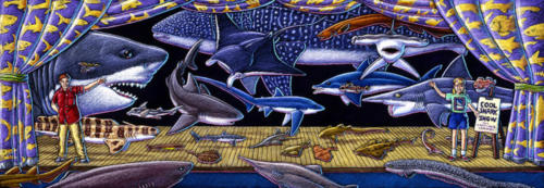 Cool Shark Show
