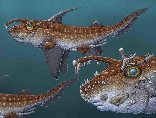 Fossil Ratfish