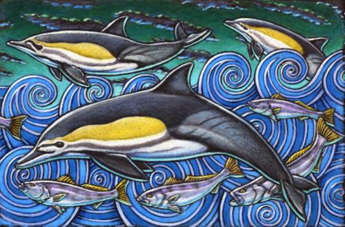 Common Dolphins (Atlantic Ocean coloring)