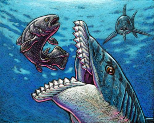 Edestus giganteus