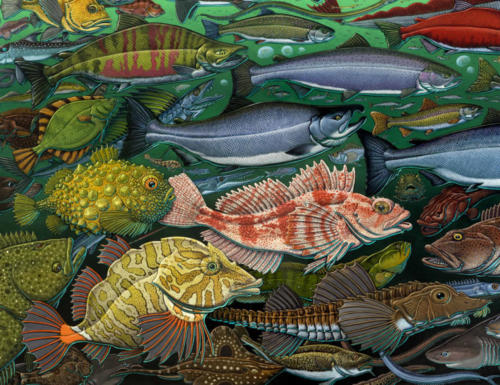 detail from Fishes of the Salish Sea