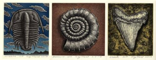 Holy Trinity of Fossil Collecting