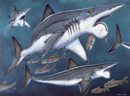 Helicoprion, with Support Strut in Lower Jaw