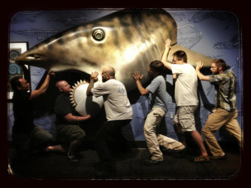 The crew hanging Gary Staab's life-sized Helicoprion sculpture at the Idaho Museum of Natural History in Pocatello.