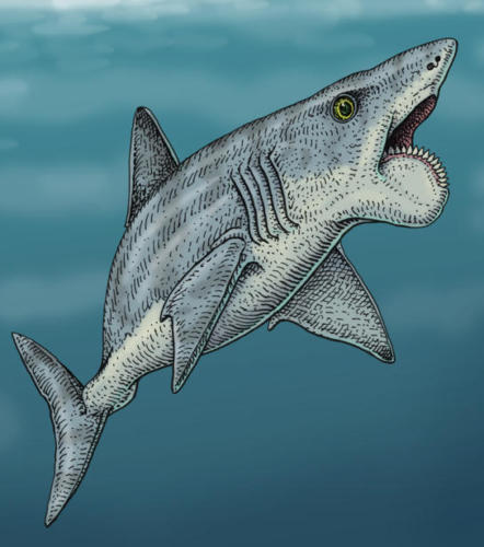 Last Helicoprion