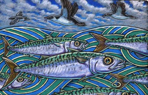 Mackerel (spot the halo?)