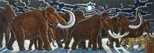 Mammoths in the Moonlight