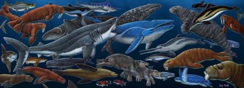 Miocene Marine Life (Sharks Tooth Hill)