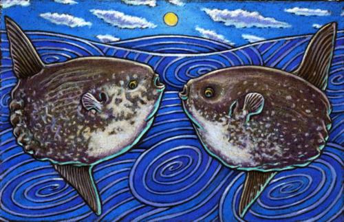 Mola Mola (AKA Ocean Sunfish)