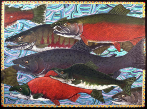 Salmon in Spawning Colors