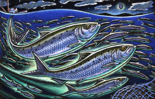 Pacific Sardines (take #1)