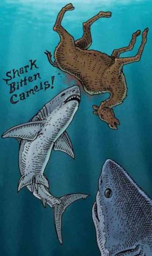 Shark Bitten Camels