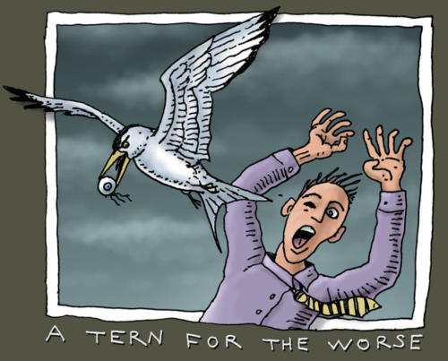 A Tern for the Worse