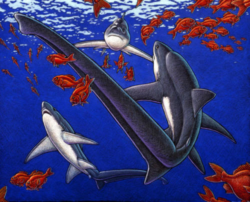 Thresher Sharks