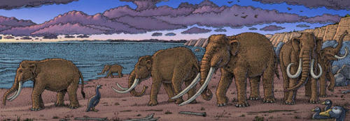 Tiny Mammoths by the Sea
