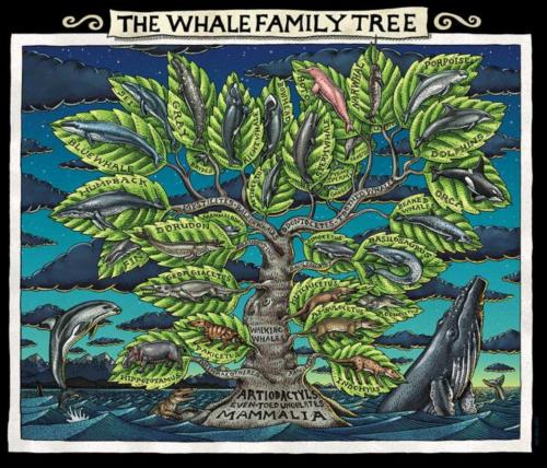 Whale Family Tree