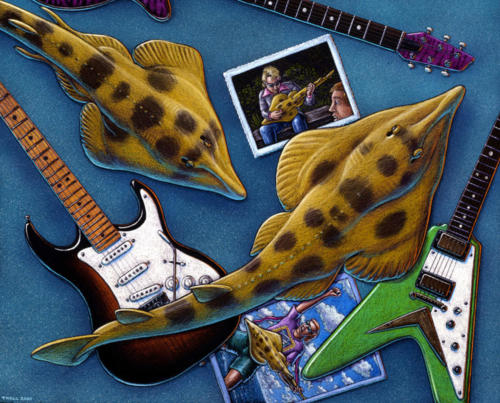 Yellow Shovelnosed Guitarfish