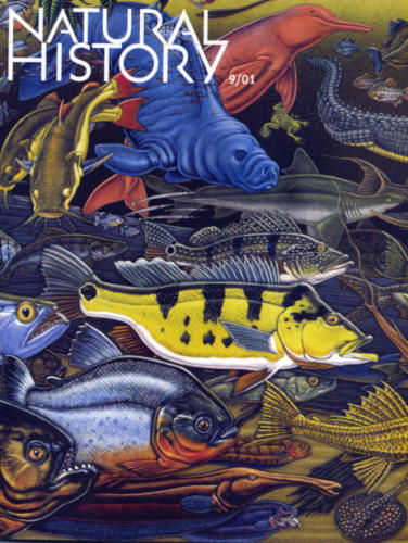 Natural History Magazine cover