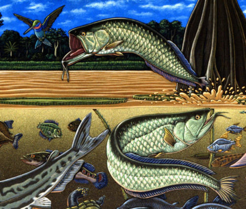 detail from Fishes of Amazonia mural