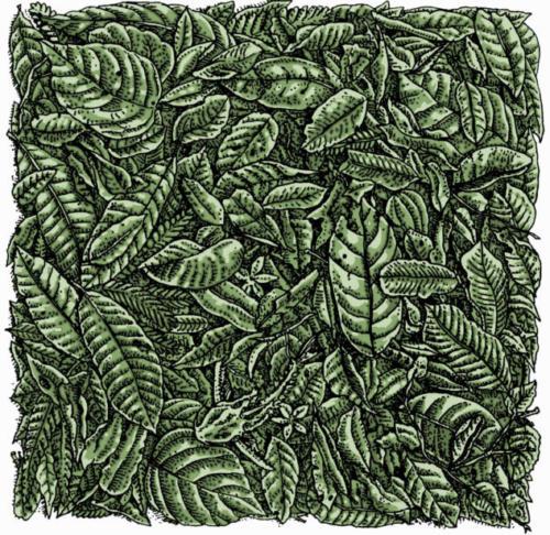 Leaf Litter Pattern
