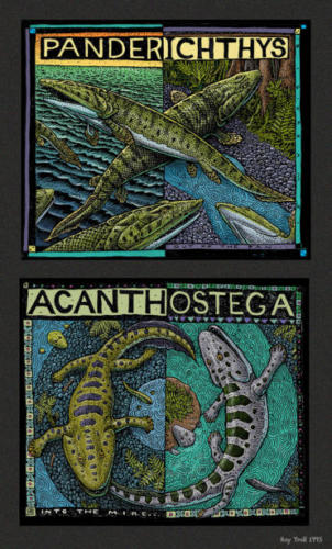 Panderichthys and Acanthostega