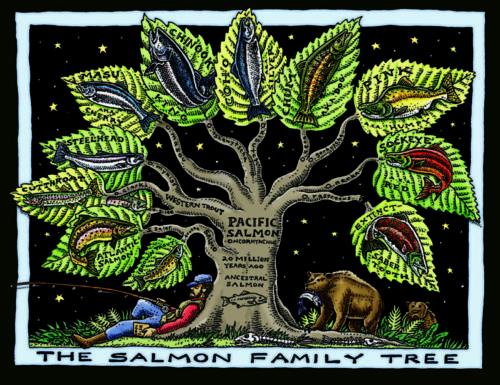 Salmon Family Tree
