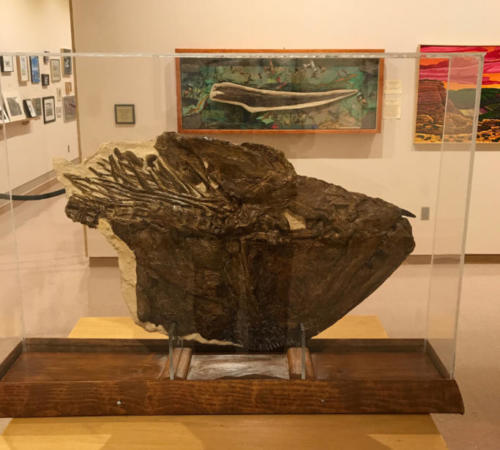 "Xiphactinus skull, ""Prairie Ocean: Long Time No Sea"" exhibit with Chuck Bonner"