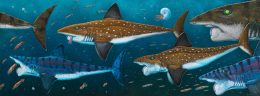 HELICOPRION PACK ART POSTER